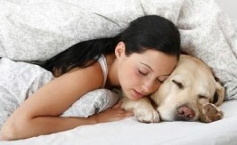 Se si dorme con animali domestici si rischia la meningite for Rivista di programmi domestici