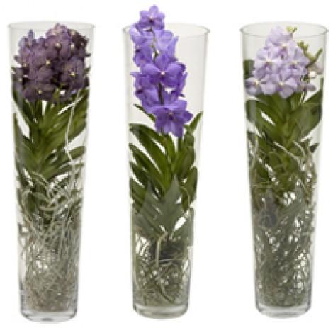 Come prendersi cura delle orchidee tutto per lei for Vaso orchidea