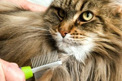 Allergia al pelo di gatto meno allergie se a contatto - L allergia porta sonnolenza ...