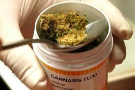 cannabis per terapie