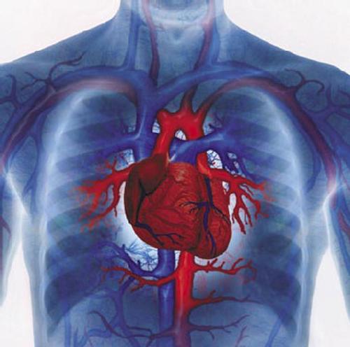 vitamina d e cuore