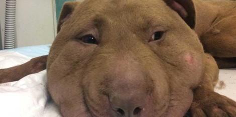 palla cane quasi decapitato migliora