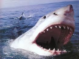 denti squali