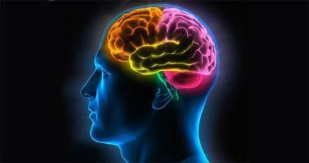 staminali nel cervello