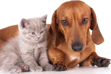 cane e gatto diabete
