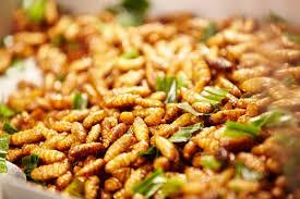 insetti edibili