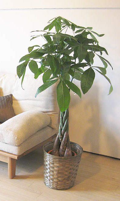 le piante da appartamento pi belle ecco come curarle