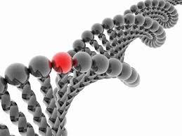 genoma sintetico