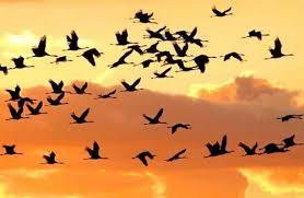 uccelli e benessere mentale