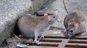 bimbo-di-tre-anni-morso-da-ratto