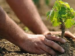 coltivazioni-terra