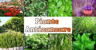 piante-antizanzare