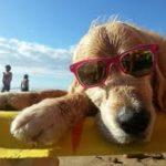 Salute cani e gatti in estate: i consigli dell'esperto